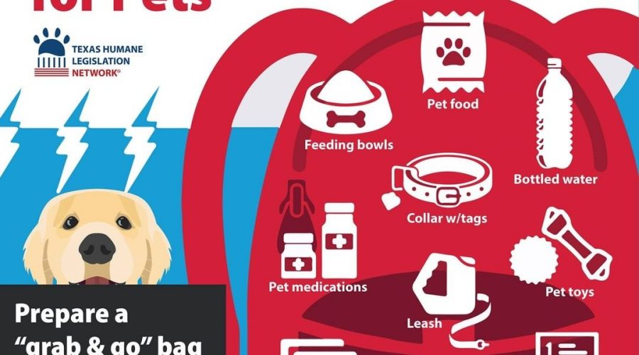 Disaster  Planning for your Pets